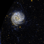 Ultraviolet images such as this one from NASA's Galaxy Evolution Explorer suggest the M83 has unusual pockets of star formation separated by large distances from the spiral arms in the main disk of the galaxy.