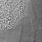 This daytime infrared image taken by NASA's 2001 Mars Odyssey spacecraft shows part of the dune field located on the floor of Proctor Crater.