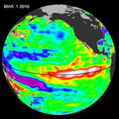 Recent sea-level height data from NASA's Jason-2 oceanography satellite show a weakening of trade winds in western and central equatorial Pacific during late-January through February has triggered yet another strong, eastward-moving Kelvin wave.