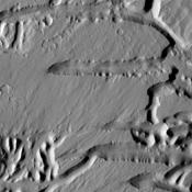 The Kasei Valles region is very complex. This image captured by NASA's Mars Odyssey illustrates that complexity with features created by fluvial action (channels) and tectonic processes (fractures).