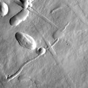 This image from NASA's Mars Odyssey shows a portion of the northeastern flank of Pavonis Mons, one of the large Tharsis volcanoes.