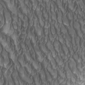 This image from NASA's 2001 Mars Odyssey shows dunes located on the floor of Proctor Crater.