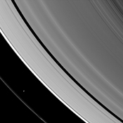 The ring-region Saturnian moons Prometheus and Pan are both caught 'herding' their respective rings in this image from NASA's Cassini spacecraft.