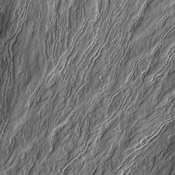 The narrow volcanic flows in this image from NASA's 2001 Mars Odyssey spacecraft are located on Olympus Mons, the largest volcano in the solar system.