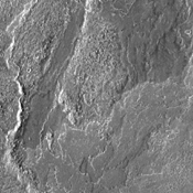 The lava flows in this image from NASA's 2001 Mars Odyssey spacecraft are part of the extensive lava plains of Daedalia Planum.