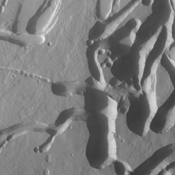 The collapse features in this image captured by NASA's 2001 Mars Odyssey spacecraft are located on the northern flank of Ascreaus Mons.